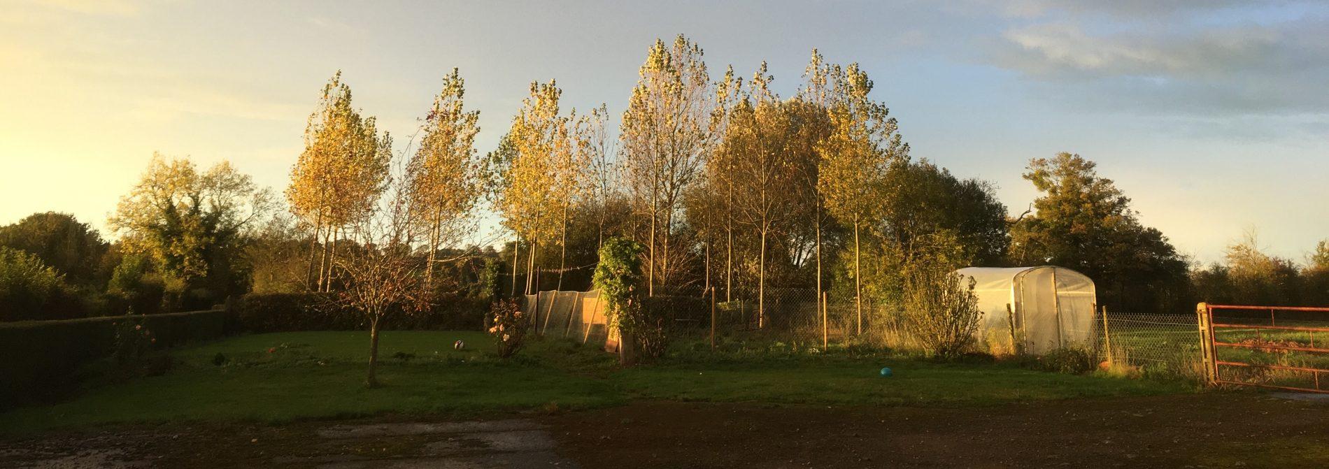 Rijtje jonge bomen met op de voorgrond een grasveld met hek en kas.
